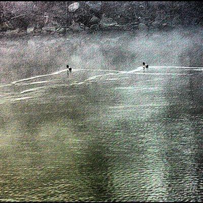 Two mallards swimming