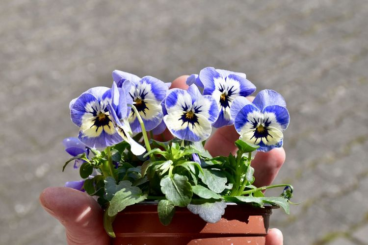 Close-up of hand holding flowers