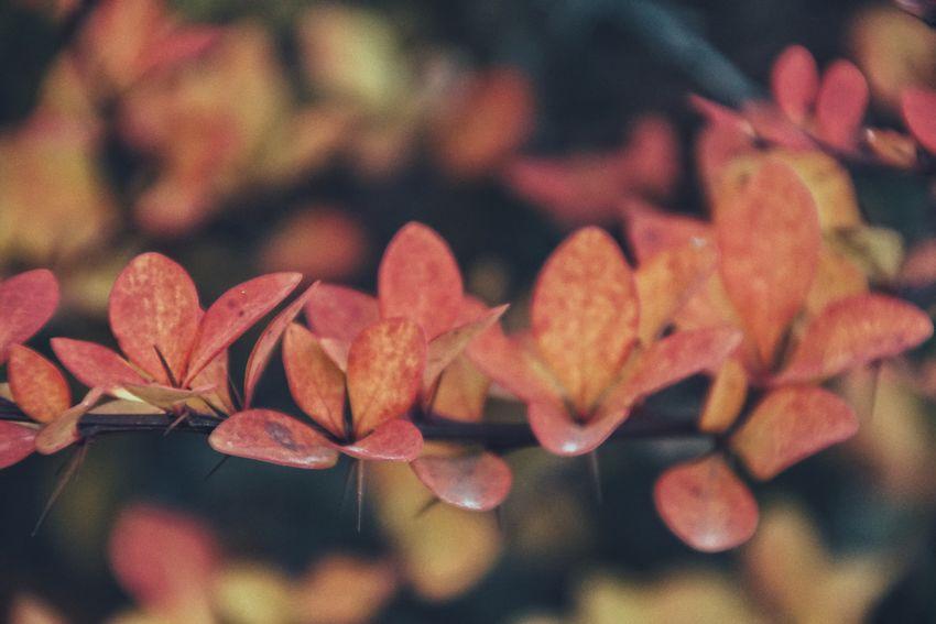 Niklas Storm Okt 2018 Autumn Autumn Collection Fall Close-up Plant Change Season  Fragility