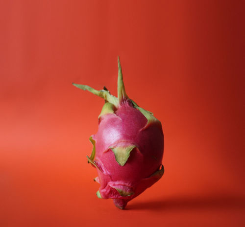 Clean Background Close-up Drachenfrucht Dragon Fruit Dragon Fruits Eat Food Foodphotography Fresh Freshness Fruit Fruits Green Green Color Leaf Organic Organic Food Organics Pastel Pink Pitahaya Pitaya Purple Red Visual Feast BYOPaper!