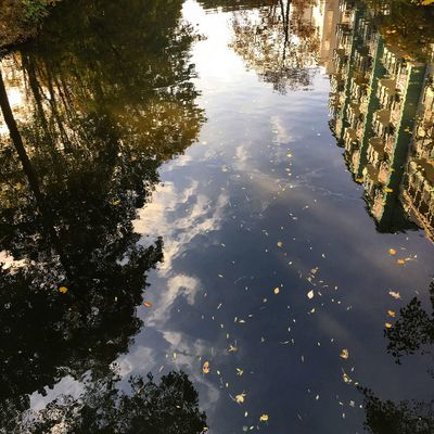 Water Reflection Tree Nature Outdoors No People Day Hamburg Germany Beauty In Nature Winterhude Discover Your City Goldbekkanal Alster Adapted To The City