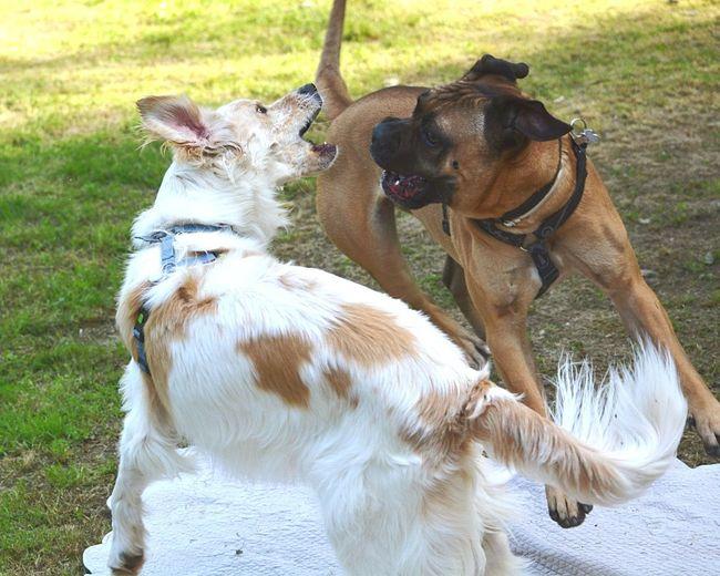 Canile Il Vagabondo Sasso Marconi Dog Pets Domestic Animals No People Animal Themes Nature Day Outdoors Friendship EyeEm Best Shots EyeEm Market © EyeEm Masterclass EyeEmBestEdits EyeEmBestPics Nikkor 18-105mm Nikon D5200