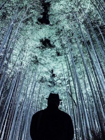 EyeEm Best Shots Kyoto From My Point Of View Silhouette EyeEm Nature Lover AMPt_community IPhoneography Bamboo Forest Illumination My Best Photo 2014