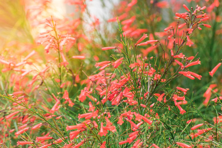 Beauty In Nature Close-up Day Flower Focus On Foreground Fragility Freshness Green Color Growth Leaf Nature No People Outdoors Plant Plant Part Red Selective Focus Tranquility Tree Vulnerability