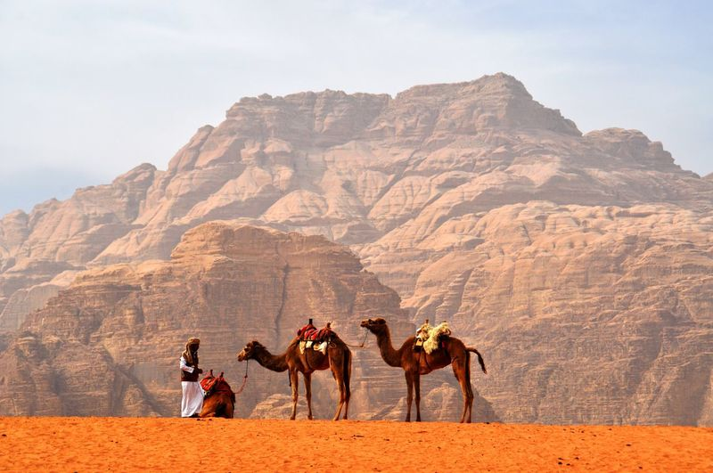 Beduin in the desert with camels and mountains