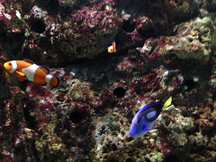 Aquaria Klcc Aquarium Dory Finding Nemo Fish Malaysia Nemo Sea Life Underwater