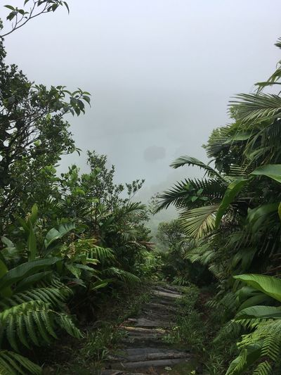 Dominica Beauty In Nature Day Growth Nature No People Outdoors Palm Tree Plant Sky Tranquility Tree Water