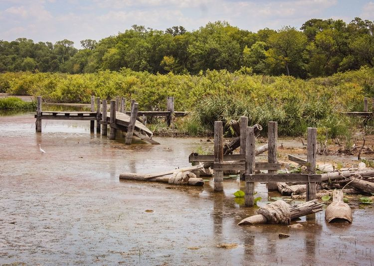 Destroyed footbridge in a marsh Lake Worth Fort Worth Eyeemphotography Canonphotography Naturelovers Nature Photography Lake Swamp Marsh Plant Tree Growth Nature Day No People Green Color Outdoors Sunlight Boundary Land Water Fence Tranquility Environment