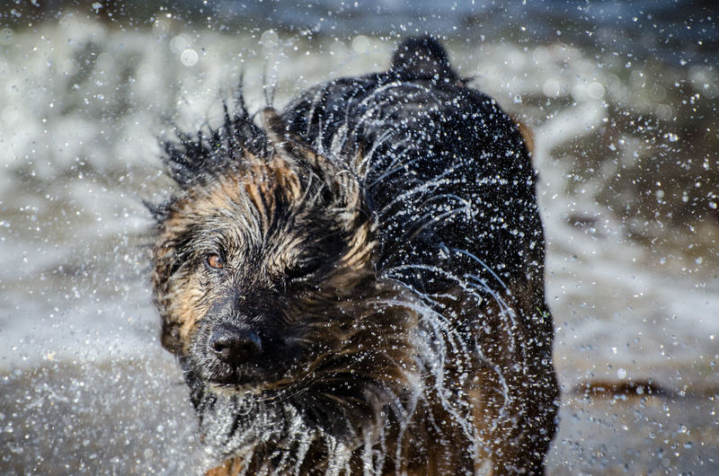 Alertness Animal Themes Backgrounds Beach Close-up Cold Temperature Curiosity Detail Domestic Animals Drop Full Frame Motion One Animal Pets Rain Relaxing Speed Splashing Transparent Water Wet Zoology