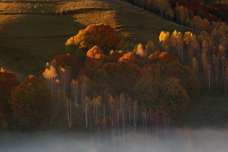 Beautiful landscape in autumn colors, at sunrise Landscape Nature Autumn Fall Forest Trees Shaddows Patterns Rolling Hills Colors Light Shaddow Mountain Sunrise Transylvania Foggy Morning Apuseni Mountains Carpathians