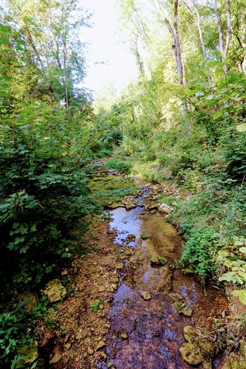 Kleiner Bach Greenery Germany🇩🇪 Forest Photography BACH Autumn Nature Silent Tree Water Forest Flora Vegetation Botanical
