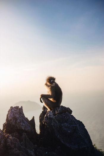 Monkey sitting on rock by sea against sky