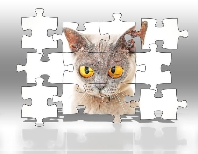 Jigsaw Piece Puzzle  Jigsaw Puzzle Solution Pattern Indoors  No People Connection Creativity Studio Shot Still Life Incomplete Leadership Confusion Close-up One Animal Cat