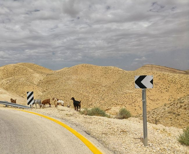 View of zebra crossing in the road