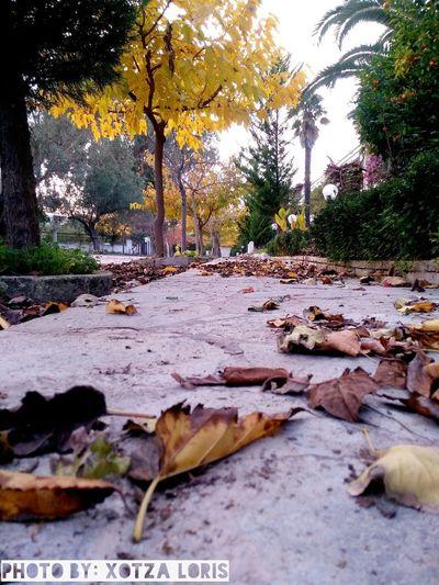Colors Of Autumn Tree Leaf Fallen Fallen Leaf Leaves