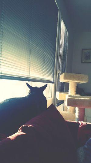 Dog Love Mylove ❤️ Mia Mylife ♡ Topshot Sunny Morning Sun Photography Czech Republic