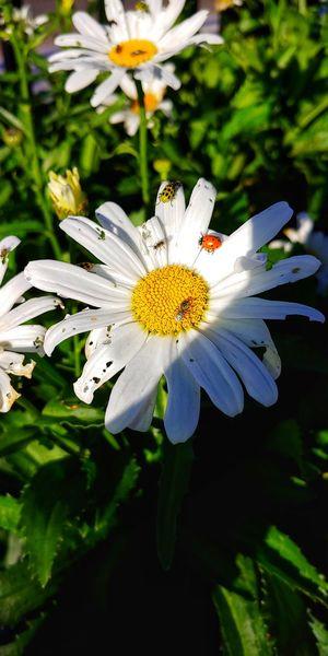 Contrast Flower