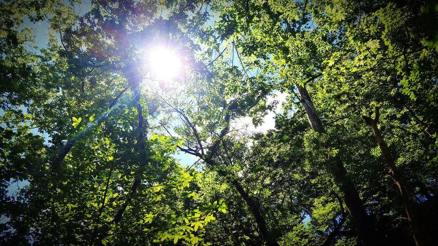 Trees, trees,