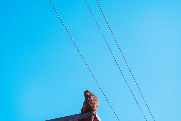 🔵🐒 Monkey Sky Wire Kathmandu Diaries Blue Blue Sky First Eyeem Photo Sonya7rii Sony