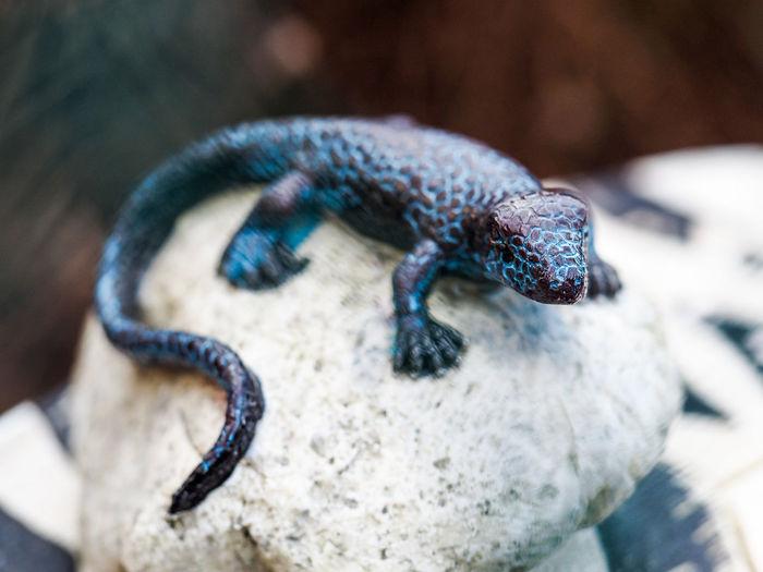 Close-up of artificial lizard on rock
