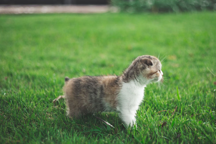 Cat looking away on grassy field