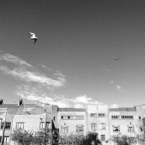 Birds flying high Light And Shadow Amsterdam EyeEm020 Melancholic Landscapes Your Amsterdam Amstelkade, Rivierenbuurt