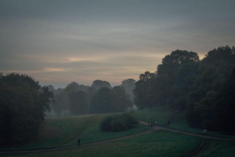 Dusk on Hampstead Heath, London Beauty In Nature Day Dusk Hampstead Heath Landscape Misty Misty Evening Nature Outdoors Scenics Sky WoodLand