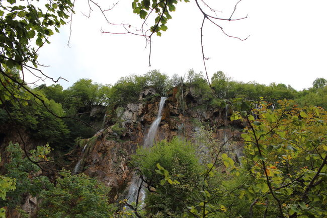 Croatia Djmarcop Trip Beauty In Nature Tranquility Scenics Clear Sky Forest Tranquil Scene Green Color Growth No People Day Tree Nature Outdoors Branch Plant Sky