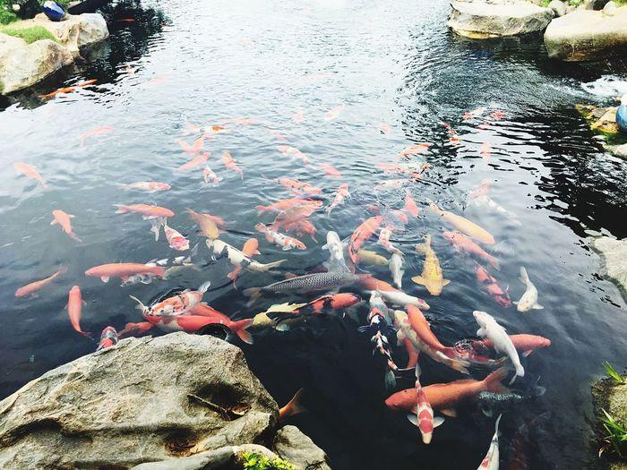 Water Group Of Animals Animal Fish High Angle View Animal Themes Vertebrate