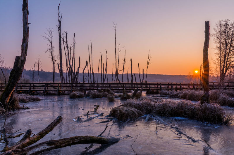 Bare Tree Beauty In Nature Cold Temperature Day Frozen Grass Growth Landscape Nature No People Outdoors Plant Scenics Sky Snow Sunrise Sunset Tranquil Scene Tranquility Tree Water Winter