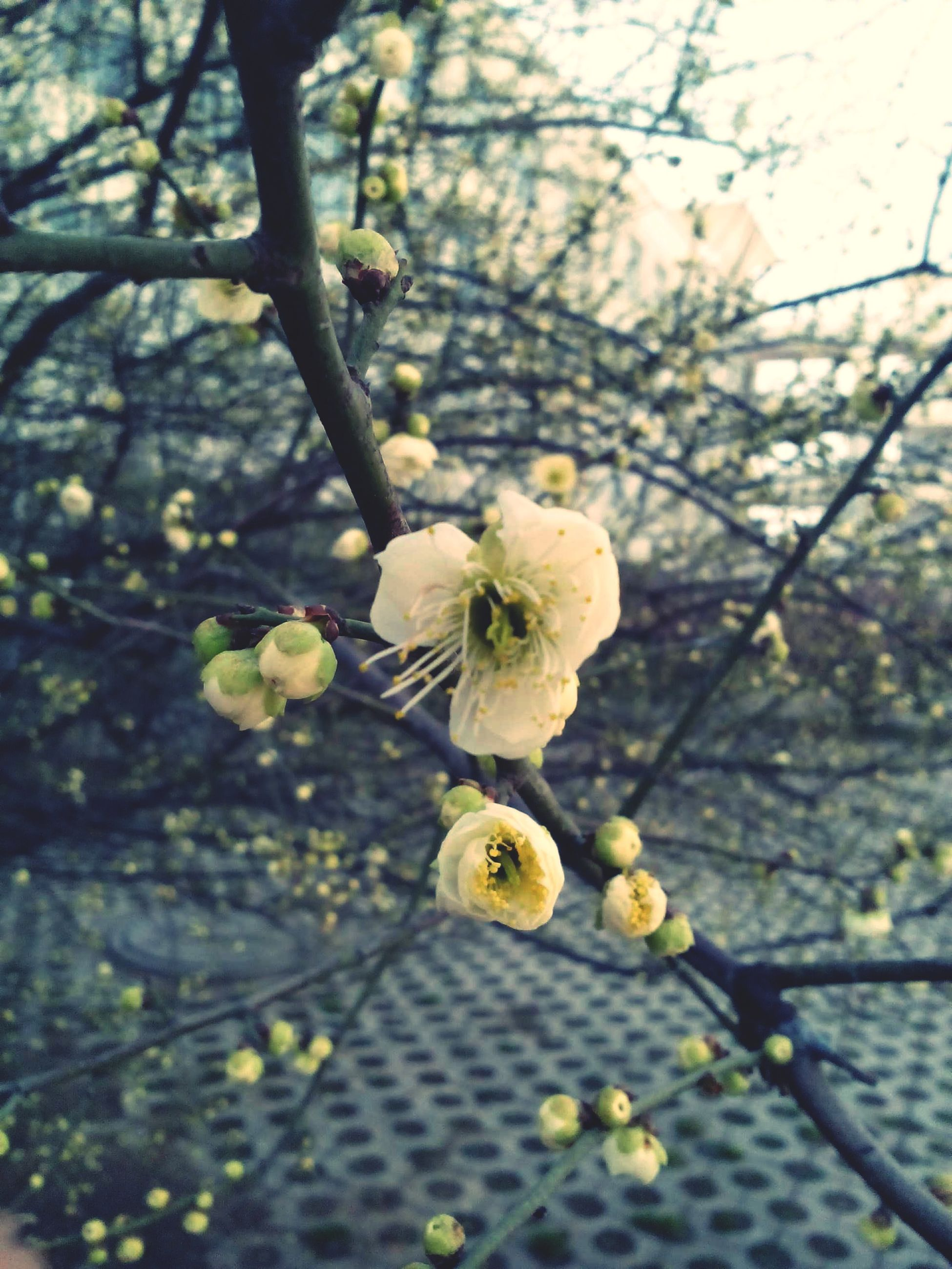 flower, freshness, fragility, petal, growth, branch, tree, close-up, nature, focus on foreground, flower head, yellow, beauty in nature, blossom, blooming, bud, in bloom, springtime, day, plant