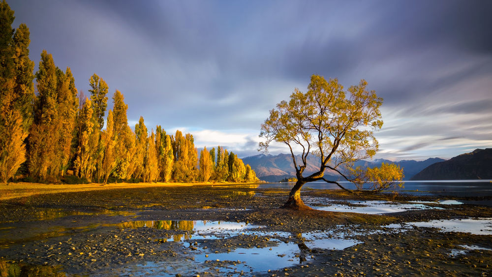 The famous tree at Lake Wanaka on the South Island New Zealand with beautiful autumn colours and soft colourful exposure shot with nature composition. Beauty In Nature Day Famous Place Lake Landscape Long Exposure Mountain Nature New Zealand Beauty New Zealand Landscape New Zealand Natural New Zealand Scenery No People Outdoors Scenics Sky Tranquil Scene Tranquility Travel Destinations Tree Wanaka Wanaka Tree Wanakalake Water The Great Outdoors - 2017 EyeEm Awards EyeEmNewHere Live For The Story