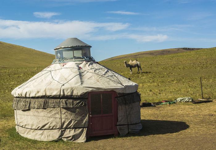 6000*4000 @300dpi RAW Nature Grassland Animal Camel Beauty In Nature Yurts