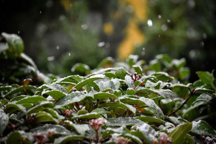 Close-Up Of Raindrops On Plants