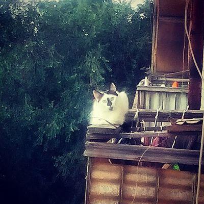 Киса с соседнего балкона каждый день меня выглядывает я ей пореглянулась ?