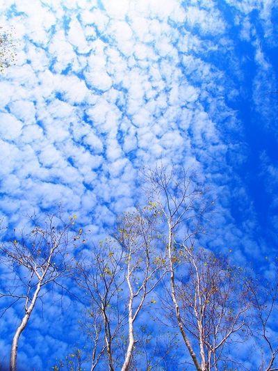 2016.10.10焼岳 Tree Beauty In Nature Sky Tranquil Scene Cloud - Sky Outdoors Japan 焼岳 空 秋 羊雲