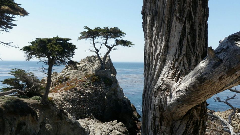 Lone Cypress & company. (Recovered photo) Tree Sea Tree Trunk Beach Pinaceae Water Nature Growth Horizon Over Water Outdoors Sky Wilderness Scenics Branch Landscape Cypress Tree Day No People Beauty In Nature 17 Mile Drive EyeEm Best Shots - Nature