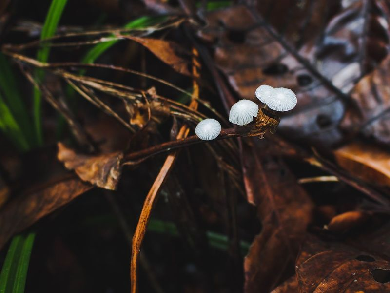 Wild mushroom. Rainforest Tropical Light Leaf Browm White Mushroom Plant Close-up Focus On Foreground No People Nature Leaf Beauty In Nature Growth Plant Part Day Selective Focus Outdoors Tranquility