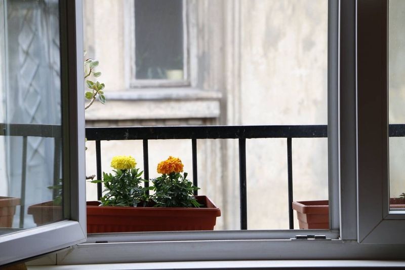 Flowers growing in pot at window
