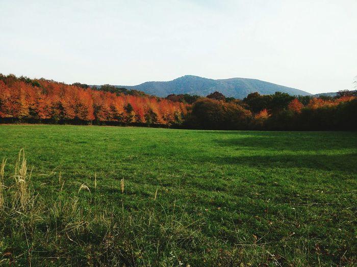 Pilis mountain.