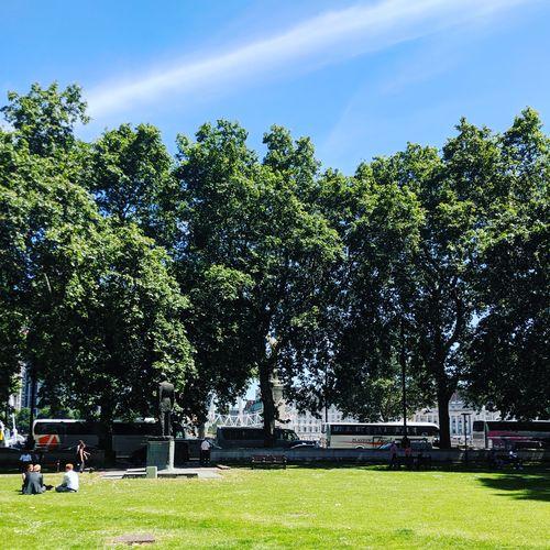 Trees in park against sky
