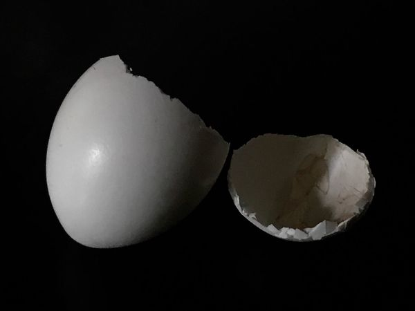 Egg Shell Broken Birds Egg White Close-up Fragility Black Background Simplicity Small Found Object