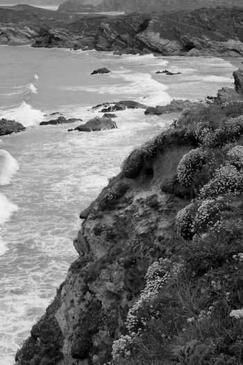 Flowery Cliff Rock Water Beauty In Nature Solid Rock - Object Sea Nature Beach Land Scenics - Nature Rock Formation Motion Rocky Coastline Blackandwhite Black And White