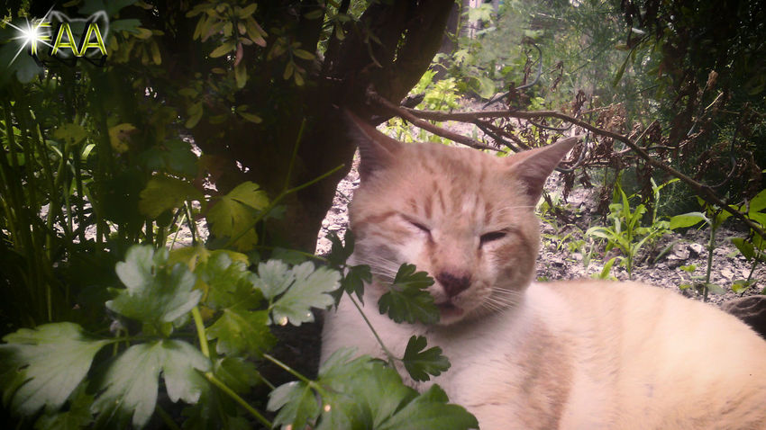 Animal Themes Day Domestic Cat Feline Growth Leaf Mammal Nature No People Outdoors Plant