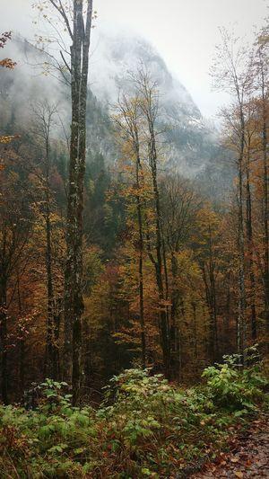 Herbst Höllentalklamm Garmisch Outinthegreen Outside Photography Clouds Alpen Wanderlust Outdoor Photography Trees