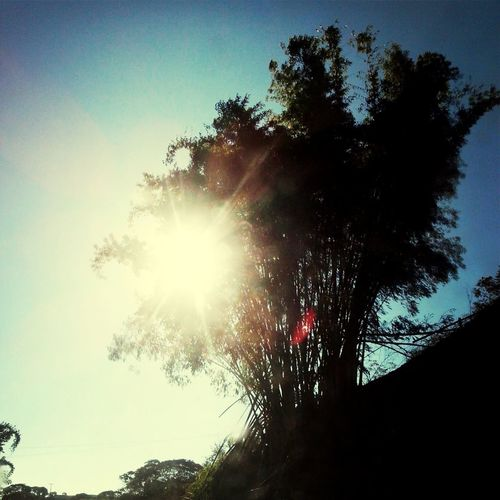 Anos.. agora ja era... Bambu First Eyeem Photo Tree Bamboo Tree...