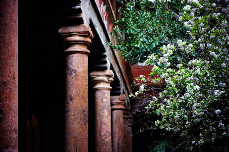 Architecture Blossom Built Structure City Citylife Courtyard  Darkness And Light ExploreEverything Garden Going For A Walk Growth La Laguna Nature No People Old Town Oldbuilding Outdoors Pillars Plants Santa Cruz De Tenerife Shadows & Lights SPAIN Tenerife Tenerife Island Wanderlust