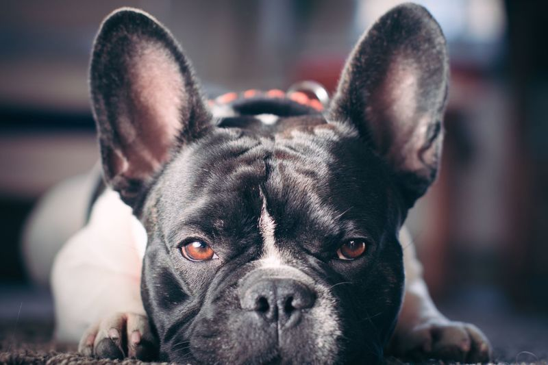 Dog Animal Themes One Animal Portrait First Eyeem Photo