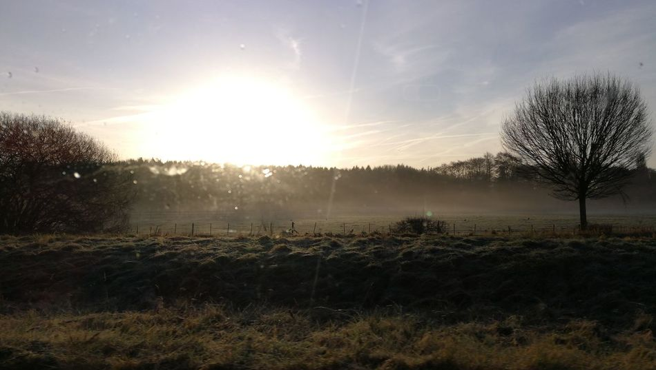 The morning mist Sunbeam Agriculture Sun Tree Sunlight Field Rural Scene Nature