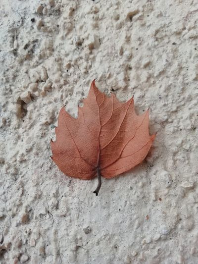 Sadness Autumn Maple Leaf Change Red High Angle View Sand Close-up Fallen Leaves